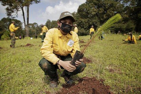 Actividades de reforestación en Áreas Naturales Protegidas Estatales, zonas prioritarias y de reconversión en Tapalpa